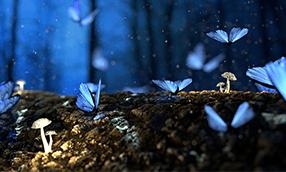 Szkolenie Adobe After Effects – moduł II